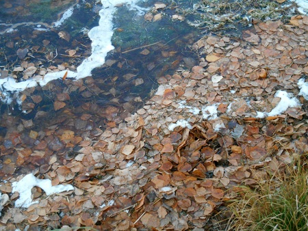 shores: Fallen leaves near the icy shores of lake beautiful fragment Stock Photo