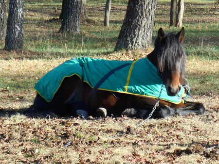 blanket horse: Horse in a blanket sleeping in the park