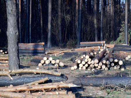 affected: Deforestation affected by fire Stock Photo