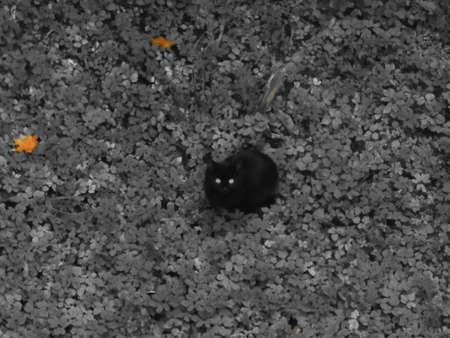 gray cat: Black cat gray background