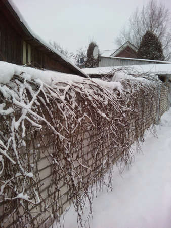 fence: Winter flora bricks wall in snow background