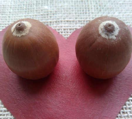 acorns: Heart and acorns eyes