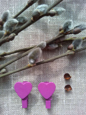 hearts background: Spring willow branches hearts background