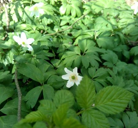 white: Spring white flowers Stock Photo