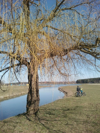 peoples: Spring willow tree and peoples on the lake shore