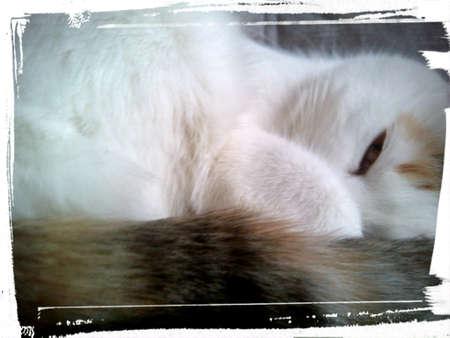 eye: Cat sleeping Stock Photo