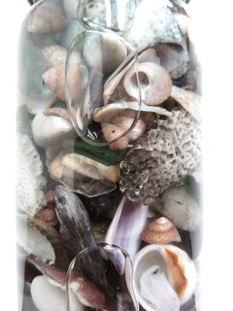 decor: Decor sea shells and stones in the bank of glass