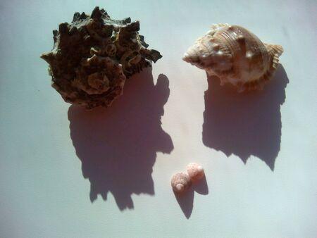 decor: Sea shells and shadows on a white