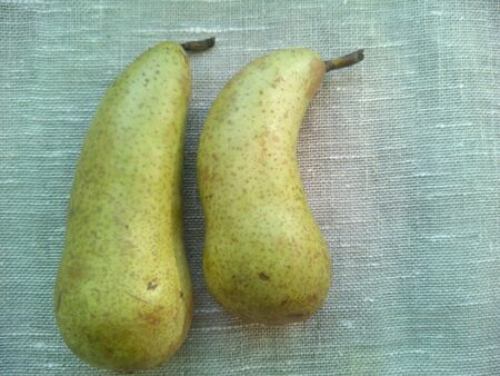 nosed: Two green pears Stock Photo