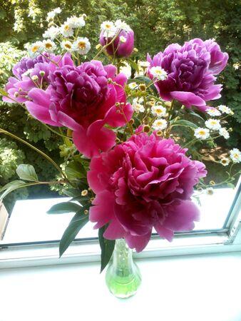 pfingstrosen: Rosa Pfingstrosen und wei�en Blumen Bouquet Hintergrund