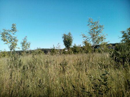 blue green background: Summer green landscape blue sky background