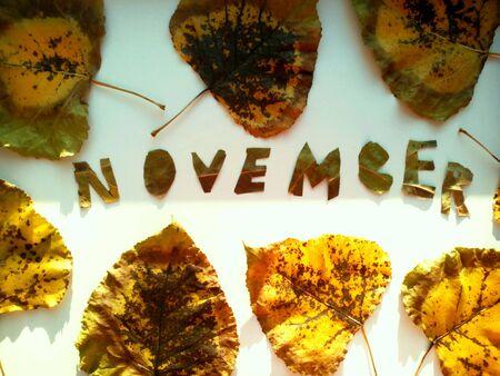 november: November leaves and beautiful texture