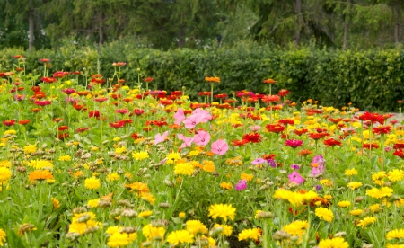 many beautiful flowers in a garden Stock Photo - 16324490