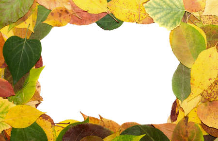 frame from multi-coloured fallen down leaves Stock Photo - 16324487