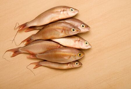 several sea bass on a light background