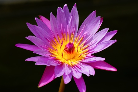 Closeup image of Lotus Plant on Wate