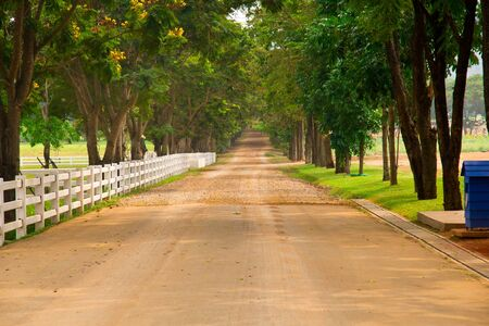 country road Stock Photo - 13060186