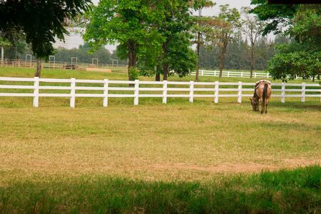 Horse in the field photo