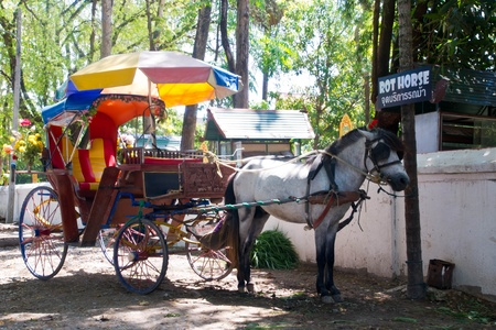 horse drawn carriage: horse drawn carriage