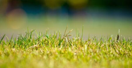 Grass Stock Photo - 14480620