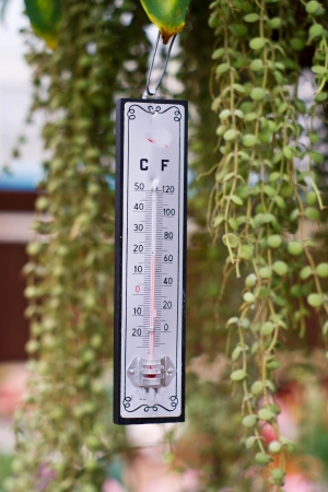 Thermometer to measure the temperature afforded in the garden, hanging on the branches. photo