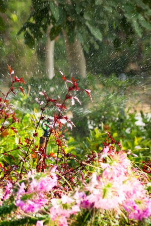 Sprinkler rotation, allowing water to enter around brightly color flowers  photo