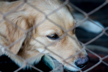 locked up in a cage: Dog locked in a cage ,closed up eye Stock Photo