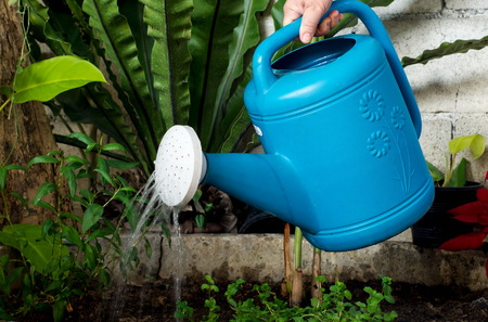 Some were seen hand-held watering can Blue watering plants.