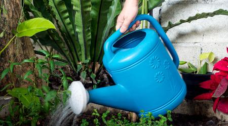 regando plantas: some were seen hand-held watering can Blue watering plants. Foto de archivo