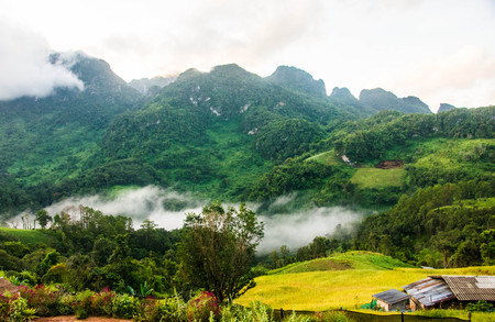 Mountain View, North of Thailand