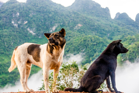 Two dogs, black and white and brown sit on the hill. Stock Photo