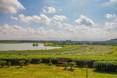 Tea Plantation near reservoir and cloud with blue sky Stock Photo