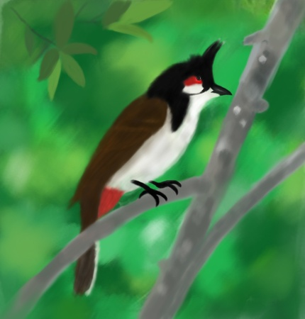 thai bird drawing picture