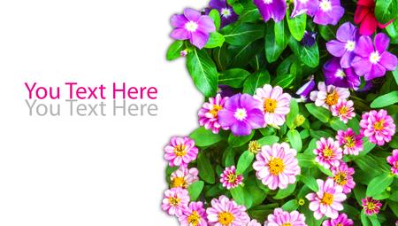 Gruppe der Blume mit leeren Lizenzfreie Bilder