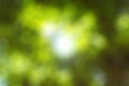 The Green bokeh der Baum Hintergrund