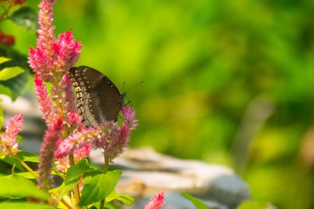 Schmetterling auf die rosa Blume Lizenzfreie Bilder