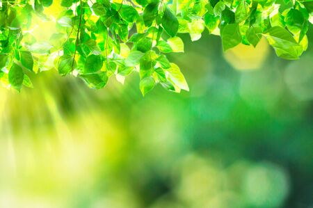 natural light: natural green background with selective focus Stock Photo