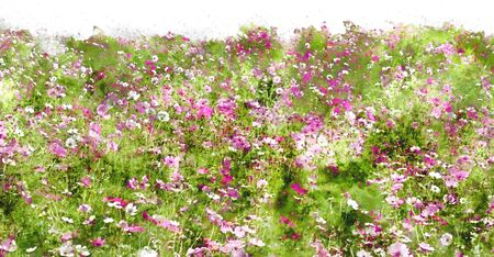 cosmos flower field watercolor effect image background