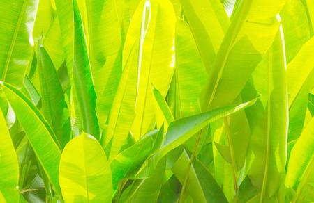 grünen tropischen Blätter am Tag Hintergrund