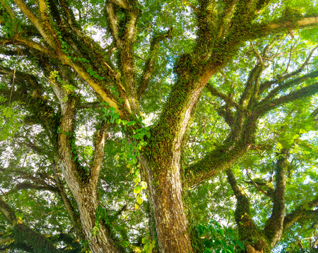 big green tree branches background,Nature composition image