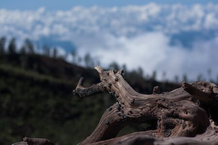 crater: Wood stump at Ijen Crater with white cloud as background Stock Photo