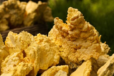 mines: Sulphur that take from Ijen Crater in East Java, Indonesia with green background