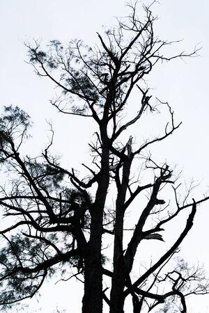 leafless: Leafless tree with white background Stock Photo