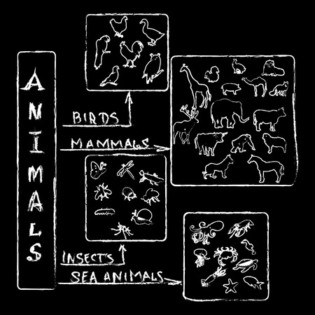 Animals Chalk Infographic photo