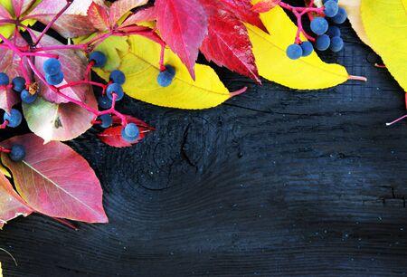 nature photo: autumn leaves background