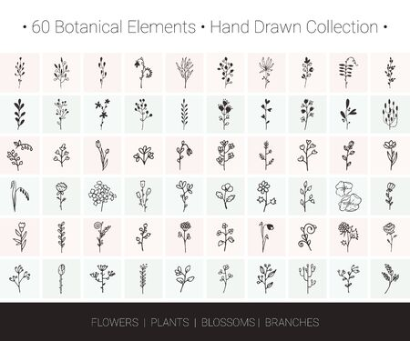 Botanical vector design elements. Branch, flower, herb, leaf, bud icons for floral wreaths, borders, designs, wedding invitation, greeting card, textile print. Hand drawn illustrations collection
