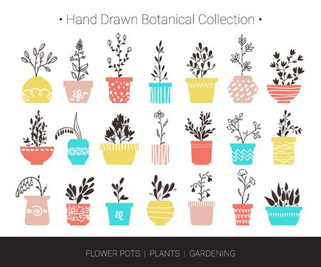 Home flowers, plants in pots. Botanical hand drawn vector illustrations for logo design, branding, fashion textile print, invitation card. Cute cartoon flowers and herbs isolated on white background.
