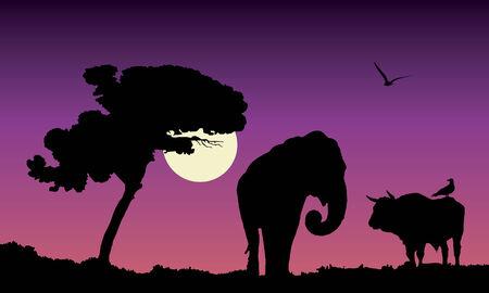 purple sunset over africa, vector illustration Vector
