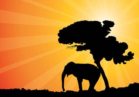 african sunshine, vector illustration Vector