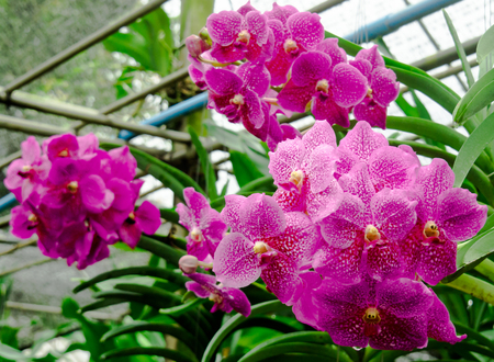 Orchid are flowers with many variants.